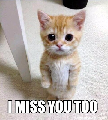 Cat Love You Meme